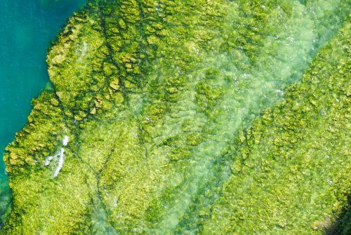 E_Microalgae
